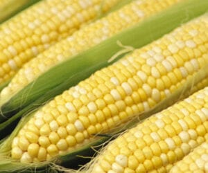 crock pot corn on the cob