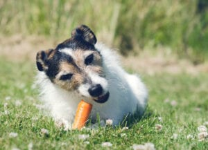Can dogs eat apples and other veggies?