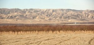 california drought dry fields