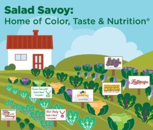 salad savoy color taste nutrition