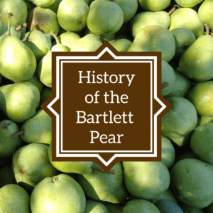 history of the bartlett pear