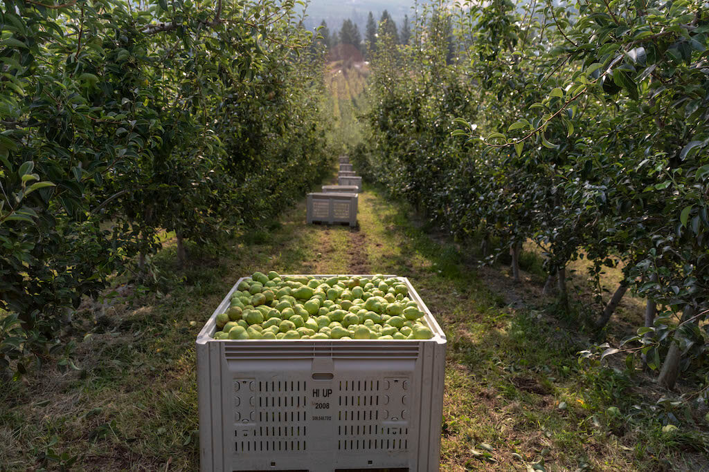 USA Pears growing region