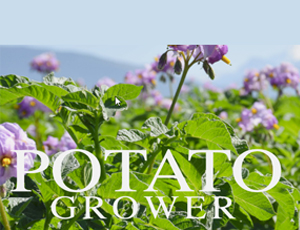 potato-grower