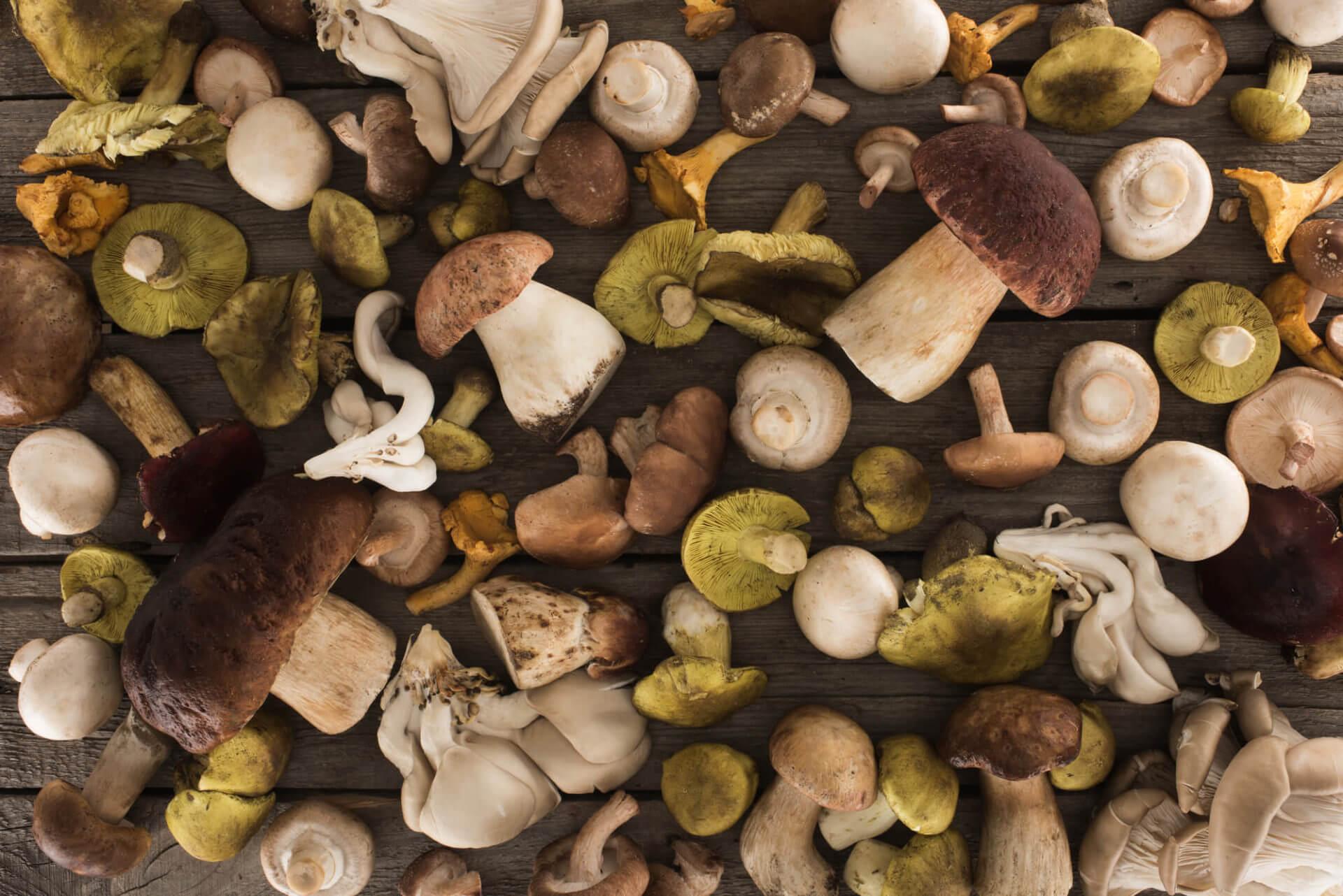 Know Your Mushroom Varieties + Mushroom Chips