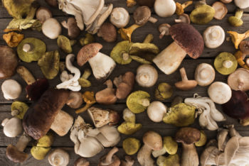 Know Your Mushroom Varieties