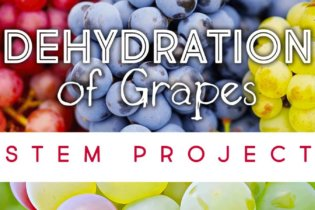 Dehydration of Grapes STEM Project