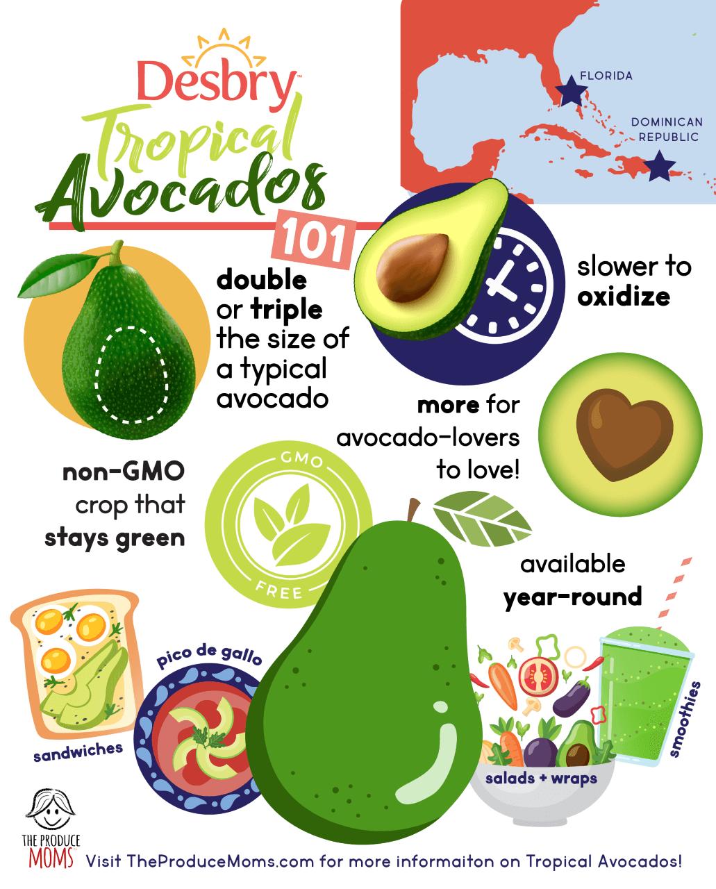 Tropical Avocados infographic