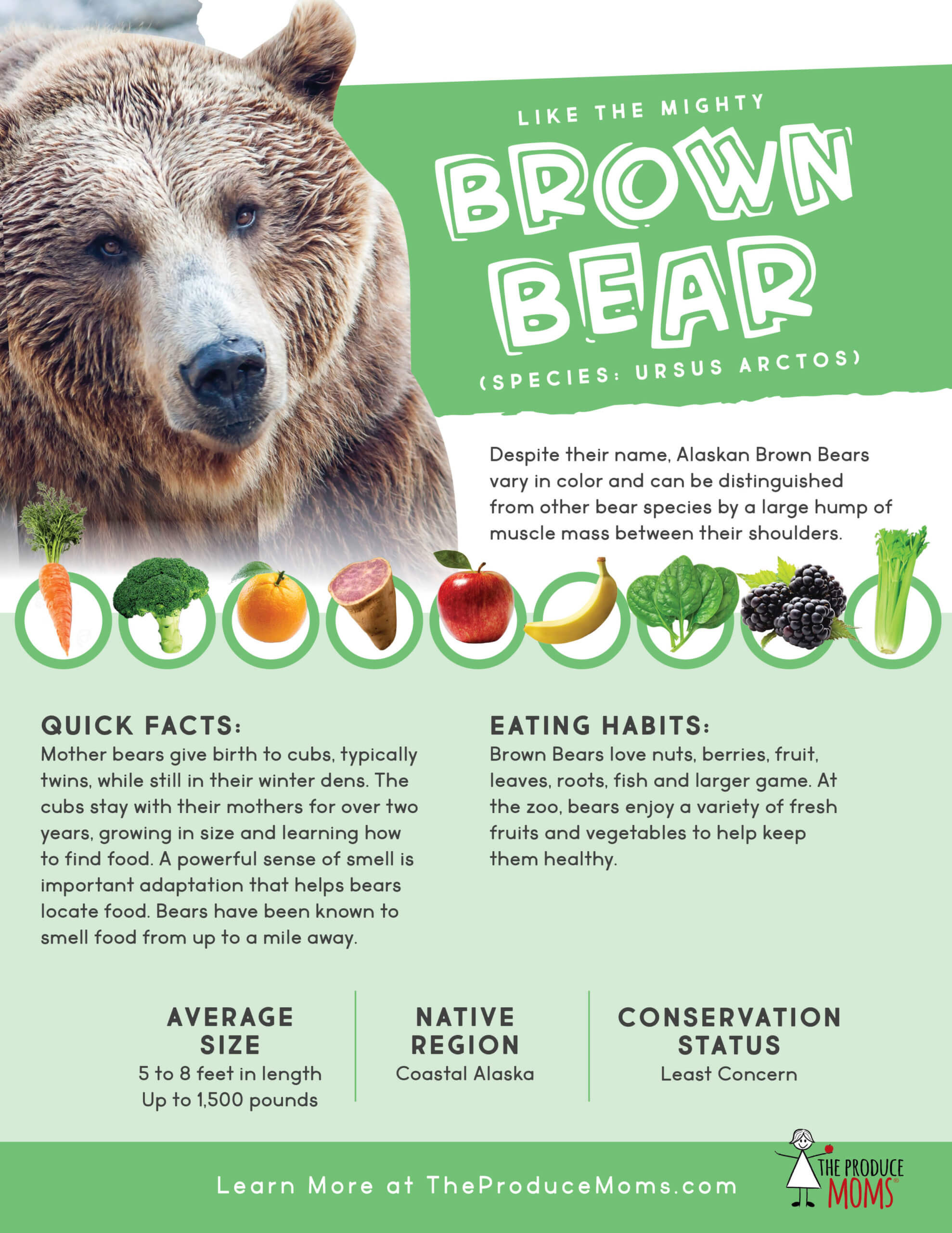 Brown Bear Fact Sheet