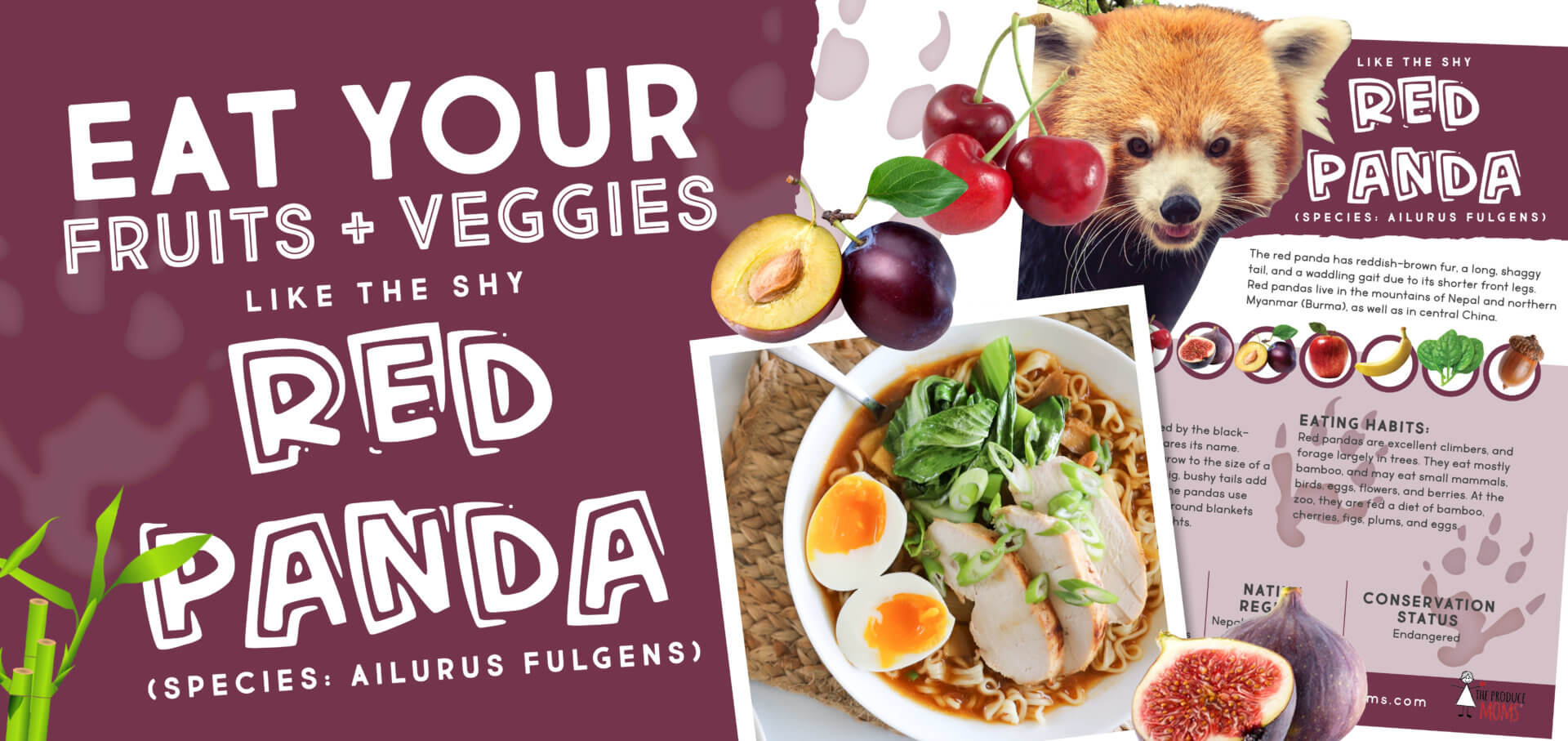 Eat Like a Red Panda: Bamboo & Chicken Ramen + Plum & Fig Salad