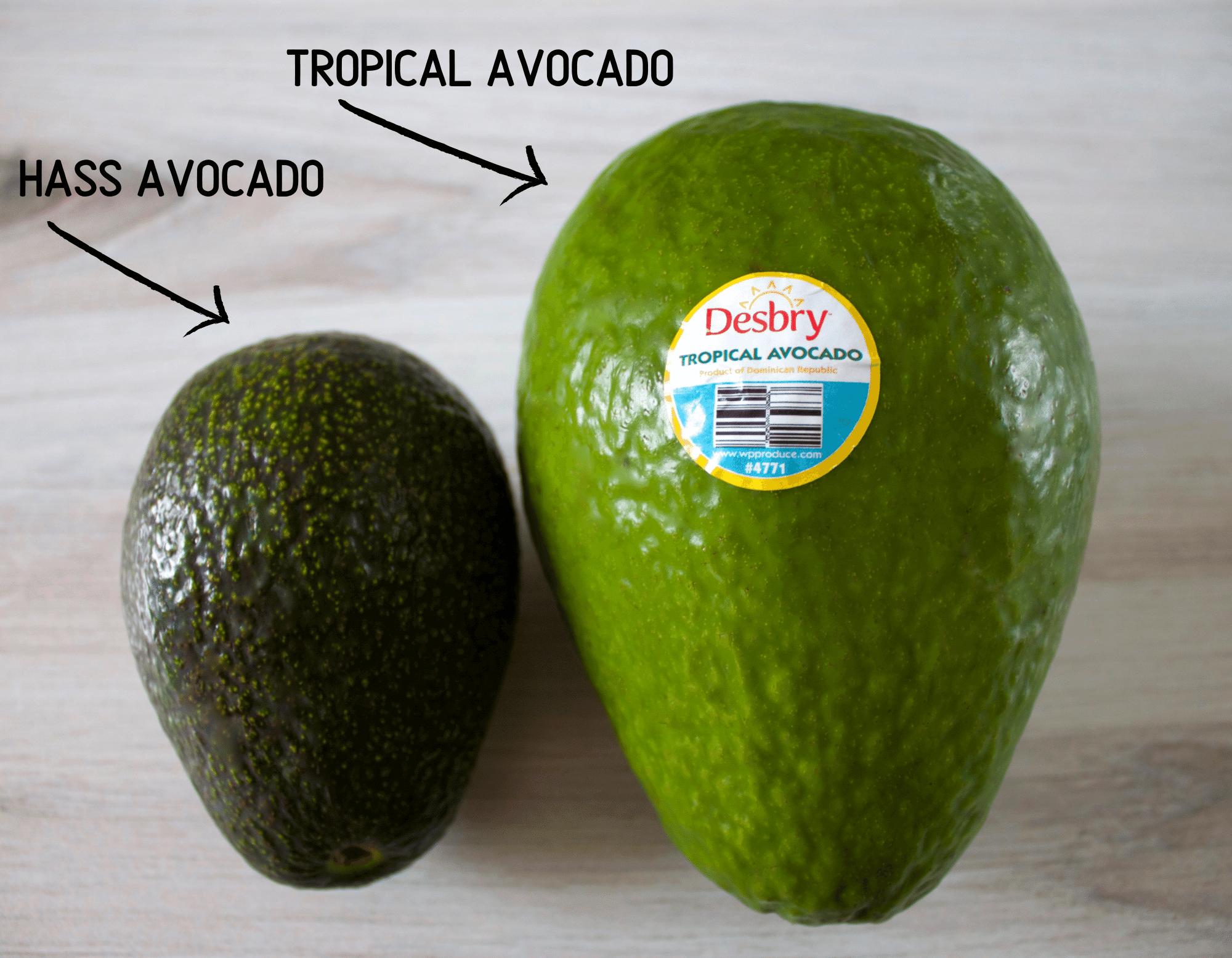 Haas vs tropical avocado