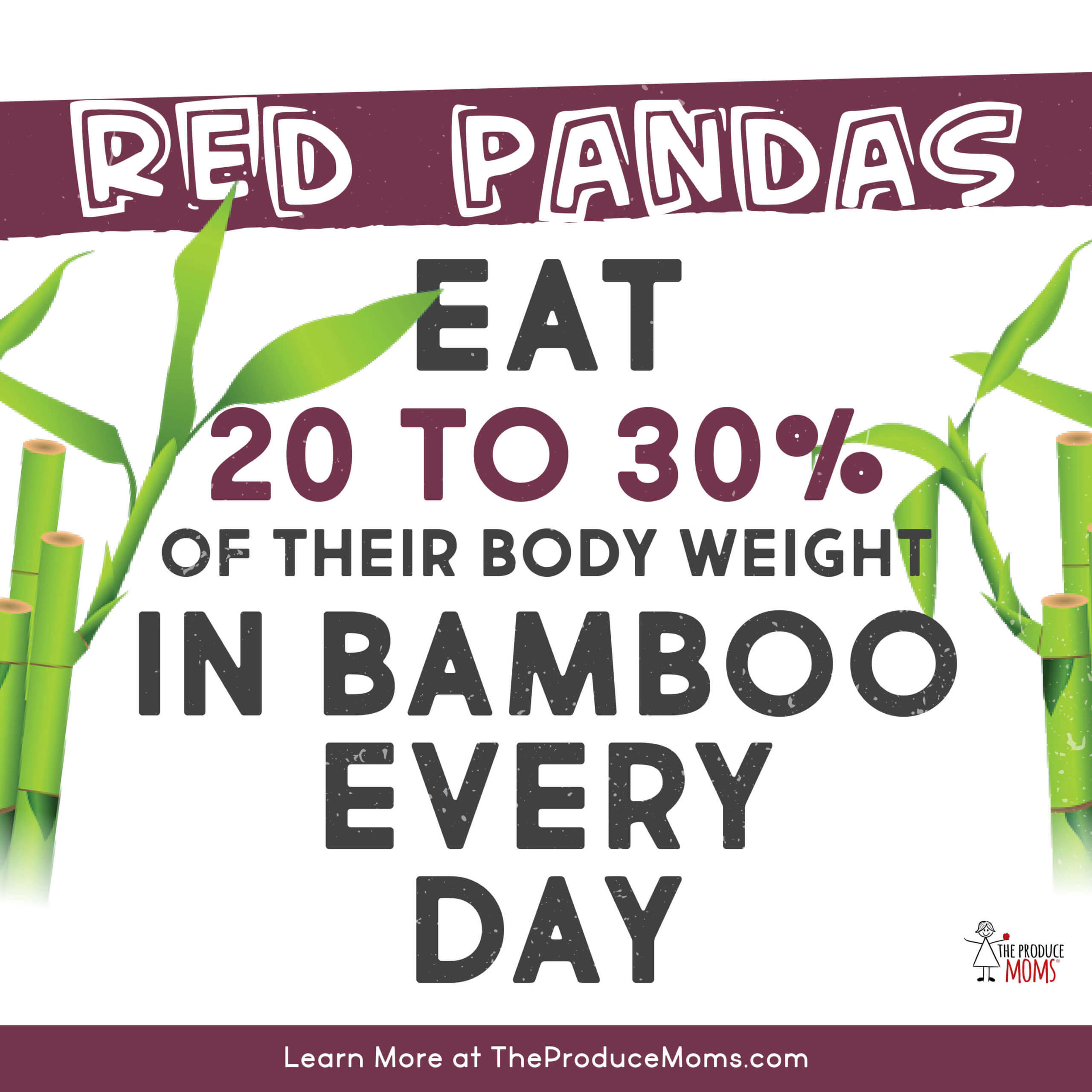Red Panda Bamboo