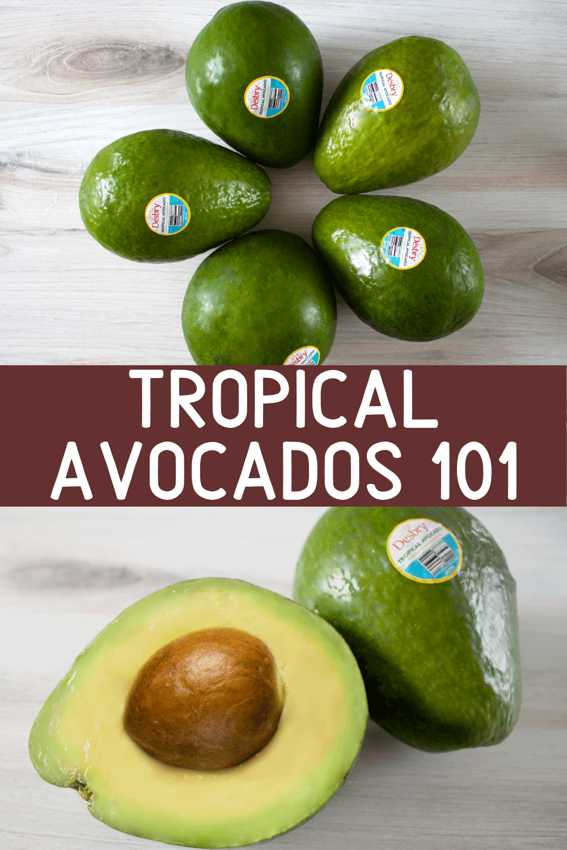 Tropical Avocados 101