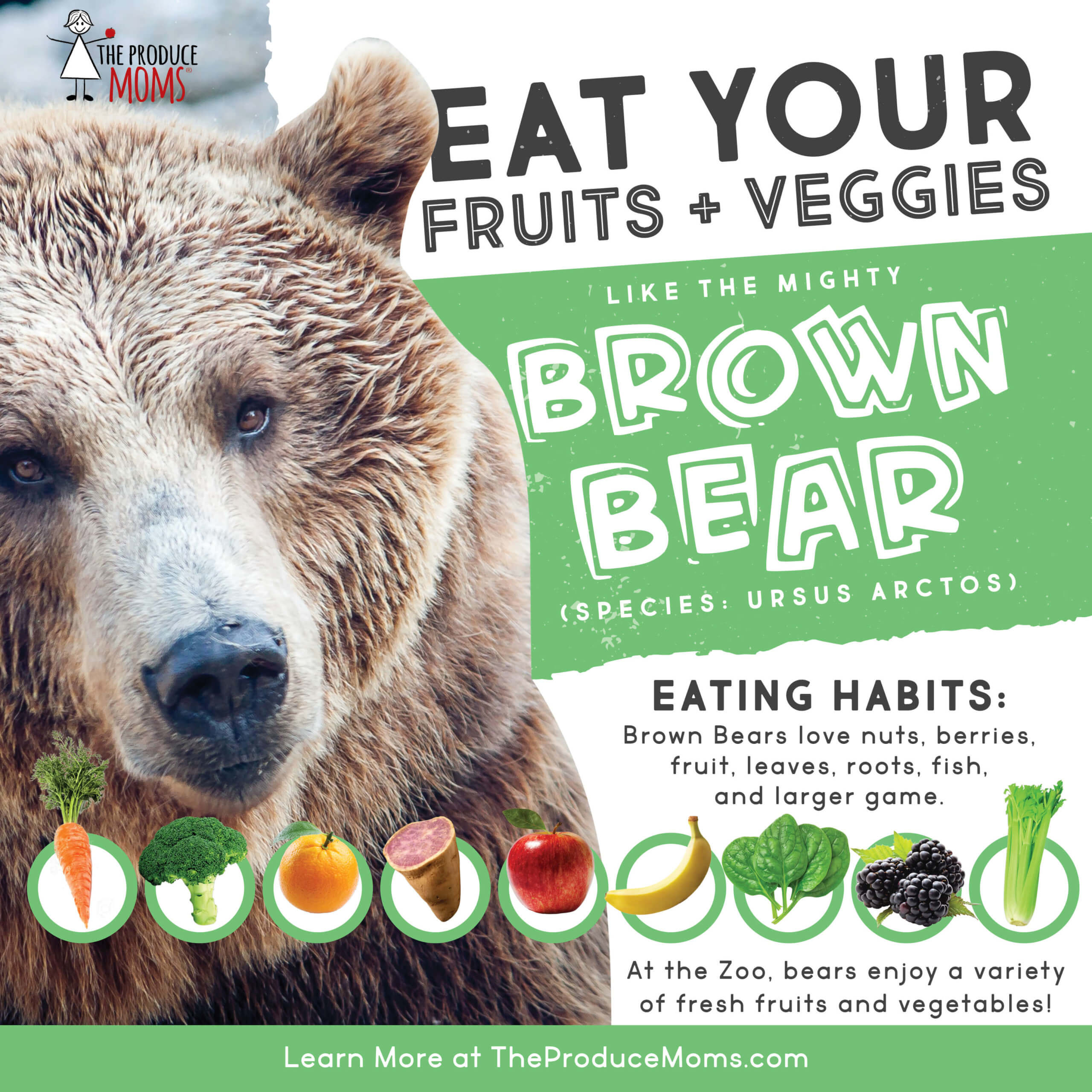 Brown Bear diet