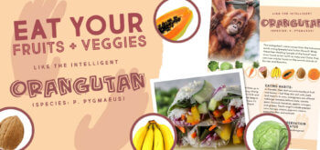 Eat Like An Orangutan: Salad Roll & Fruit Salad Buffet