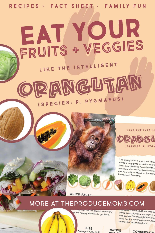 Eat Like An Orangutan: Salad Roll & Fruit Salad Buffet