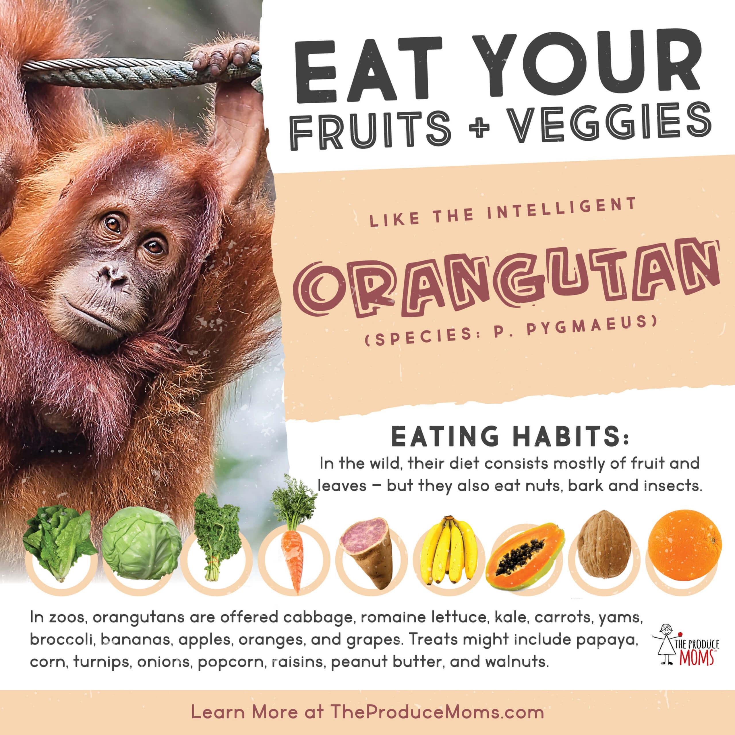 Eat Like An Orangutan