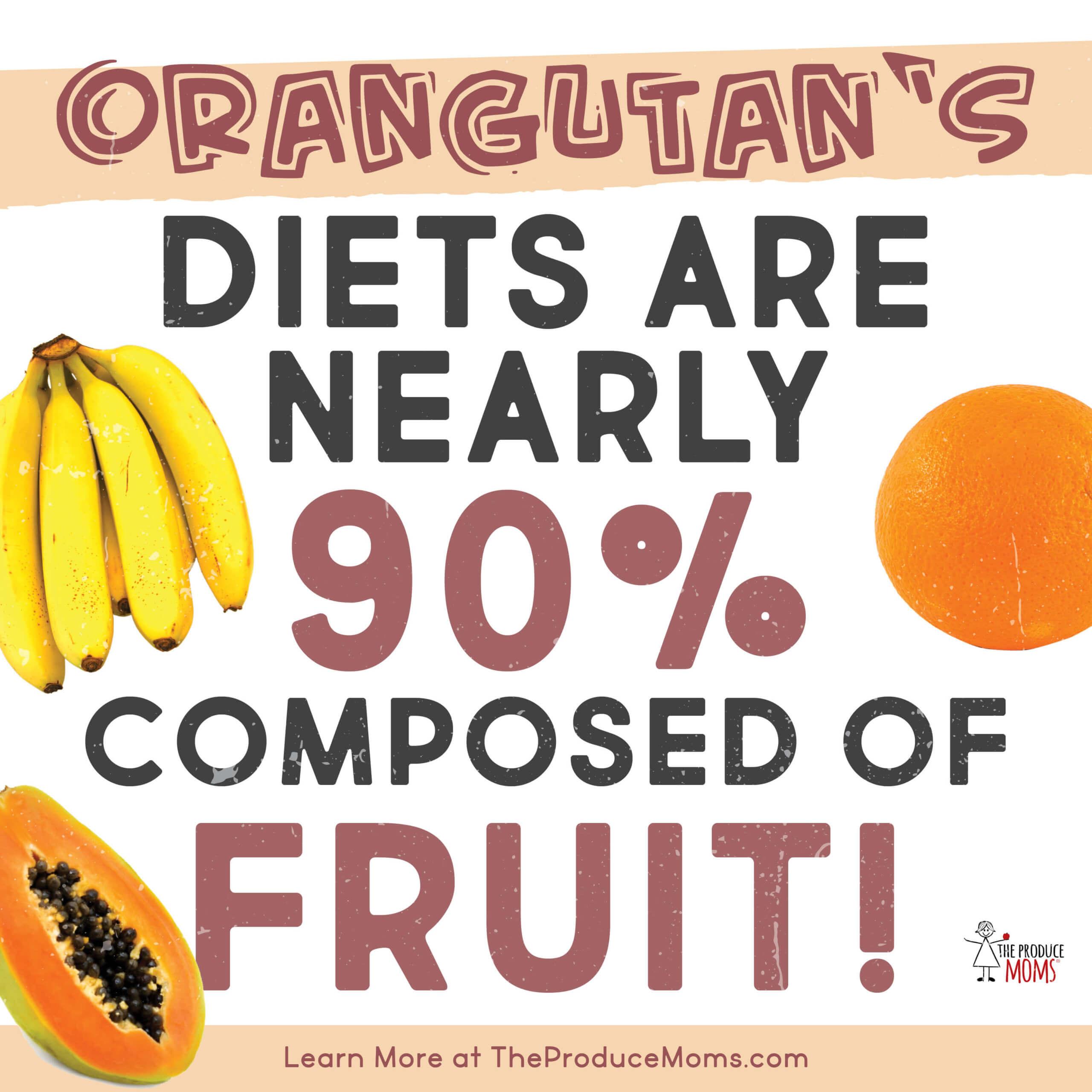 orangutan's love fruit