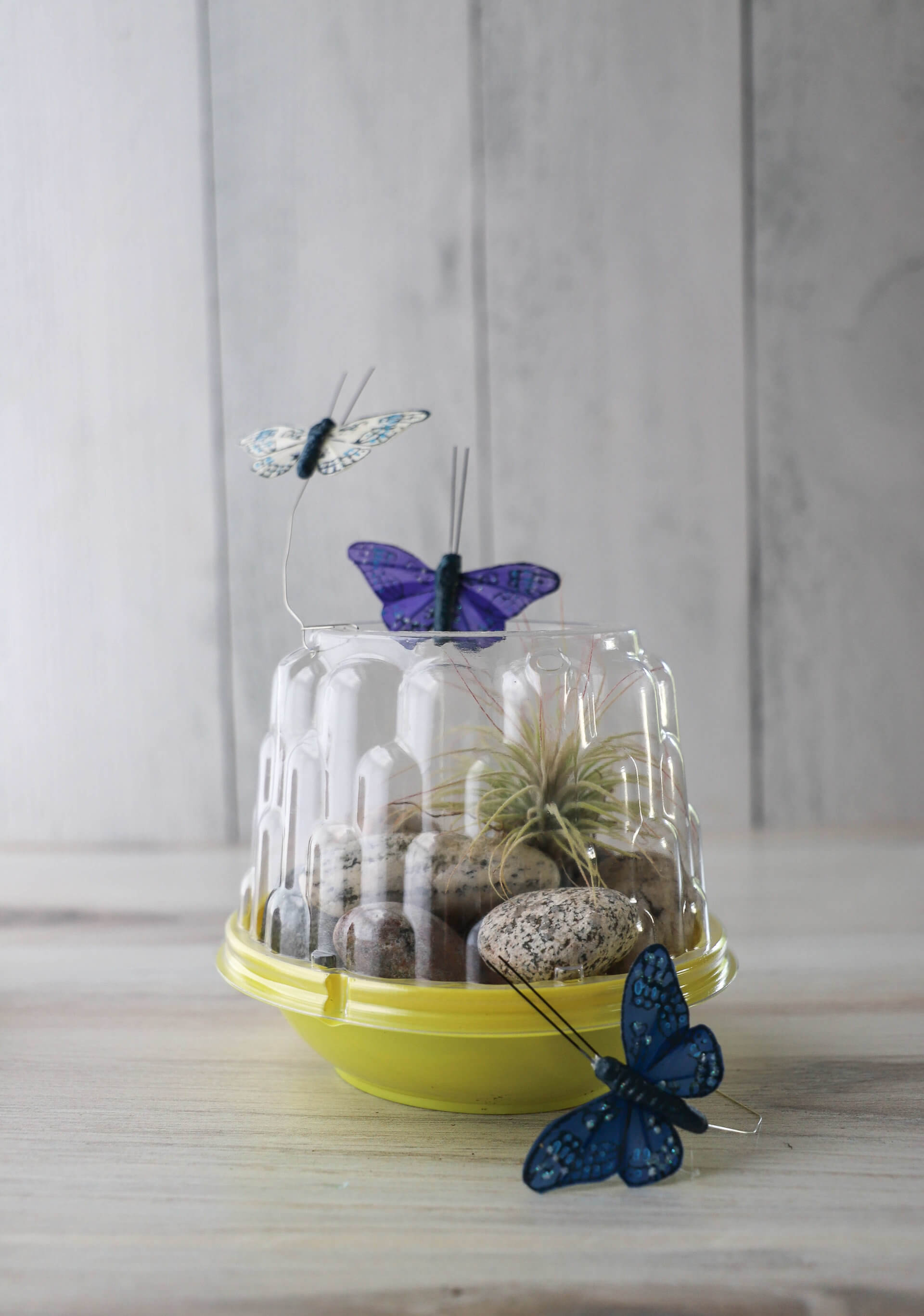 Summer Craft Ideas: Mini Terrarium