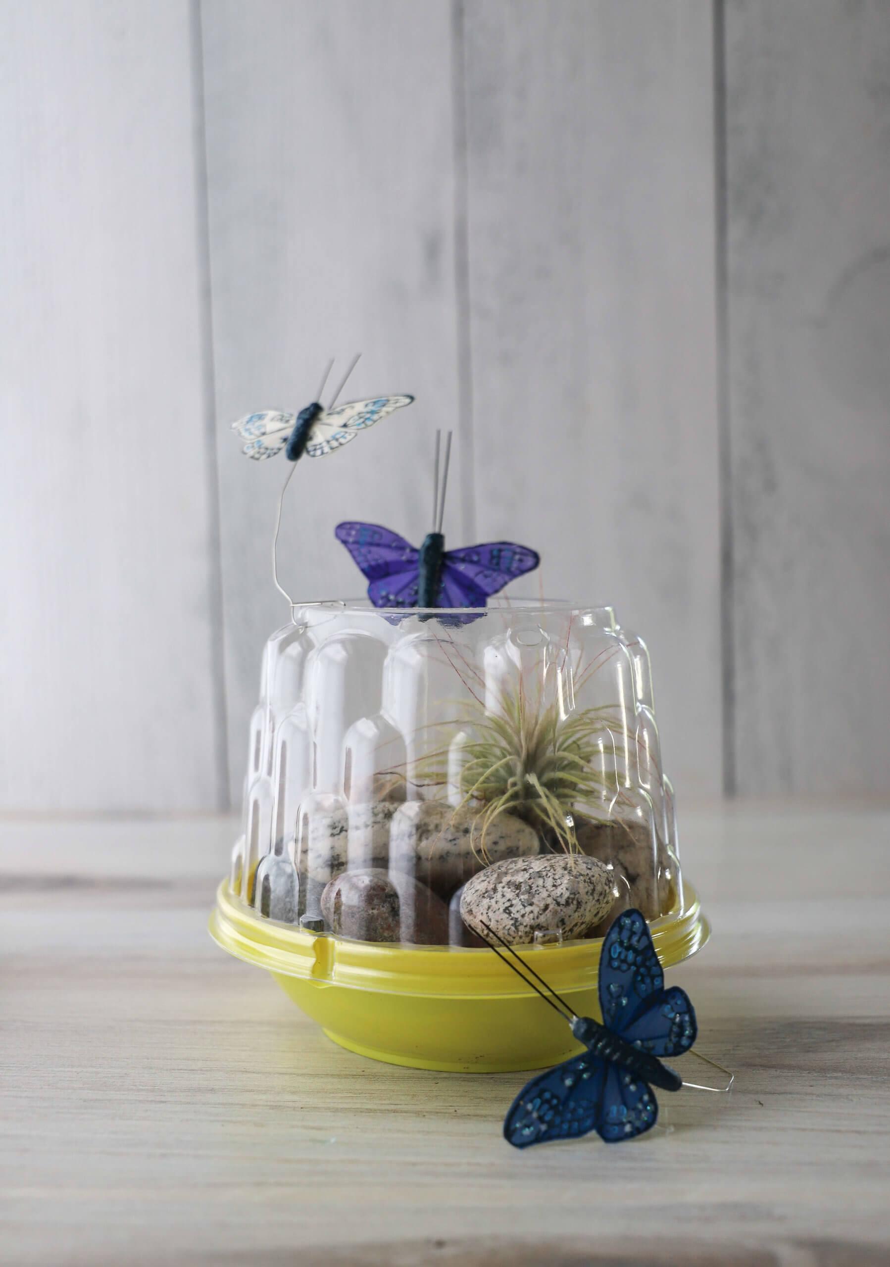 Summer Craft Ideas: Mini Terrarium