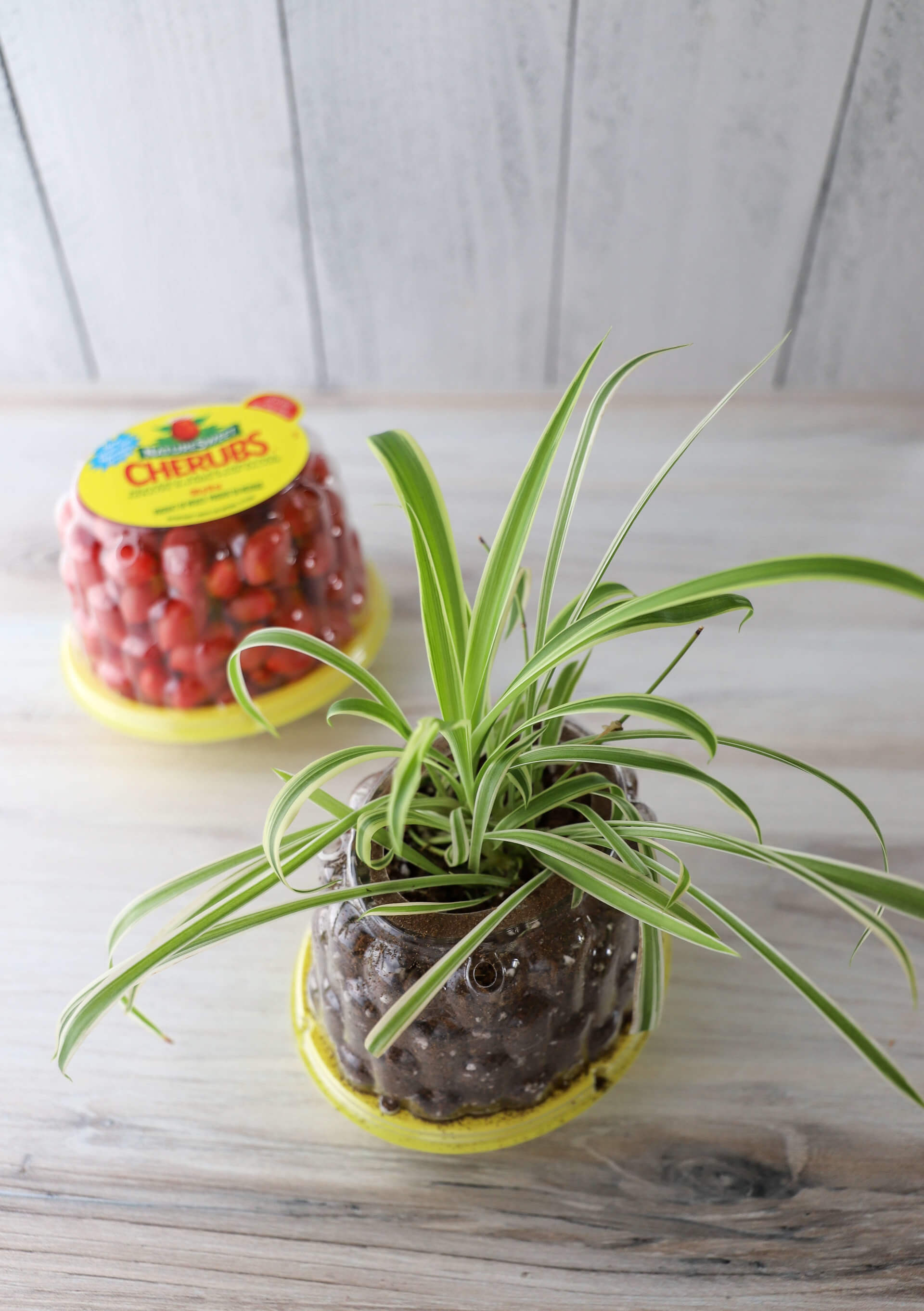 Planter or Seed Starter