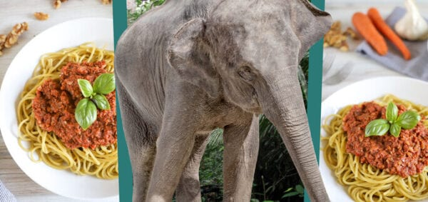 Eat Like An Asian Elephant Banner