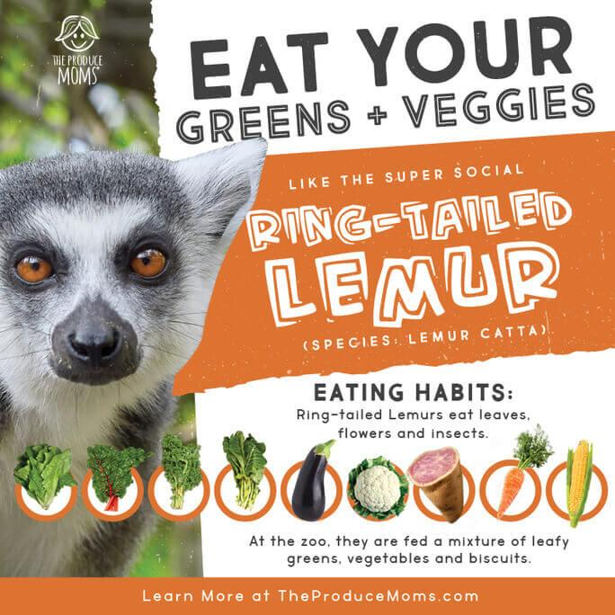 Ring-Tailed Lemur Diet Card