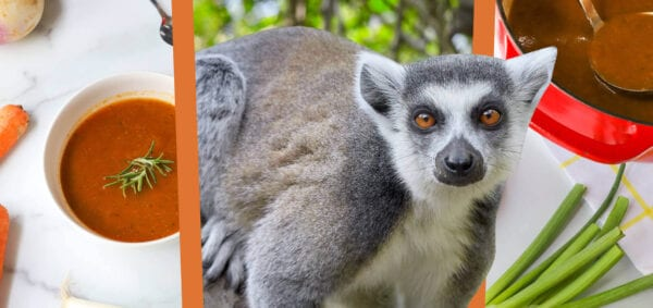 Eat like a ring-tailed lemur banner image