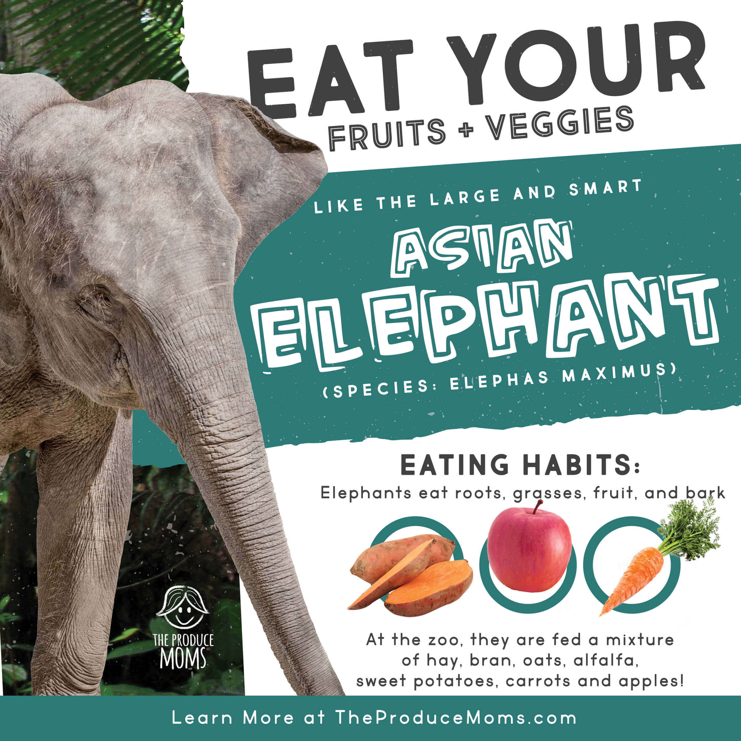 Eat Like An Elephant Diet Card