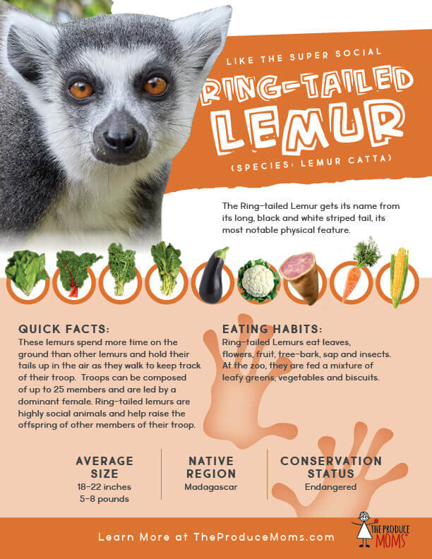 Quick Facts about the Ring-tailed Lemur
