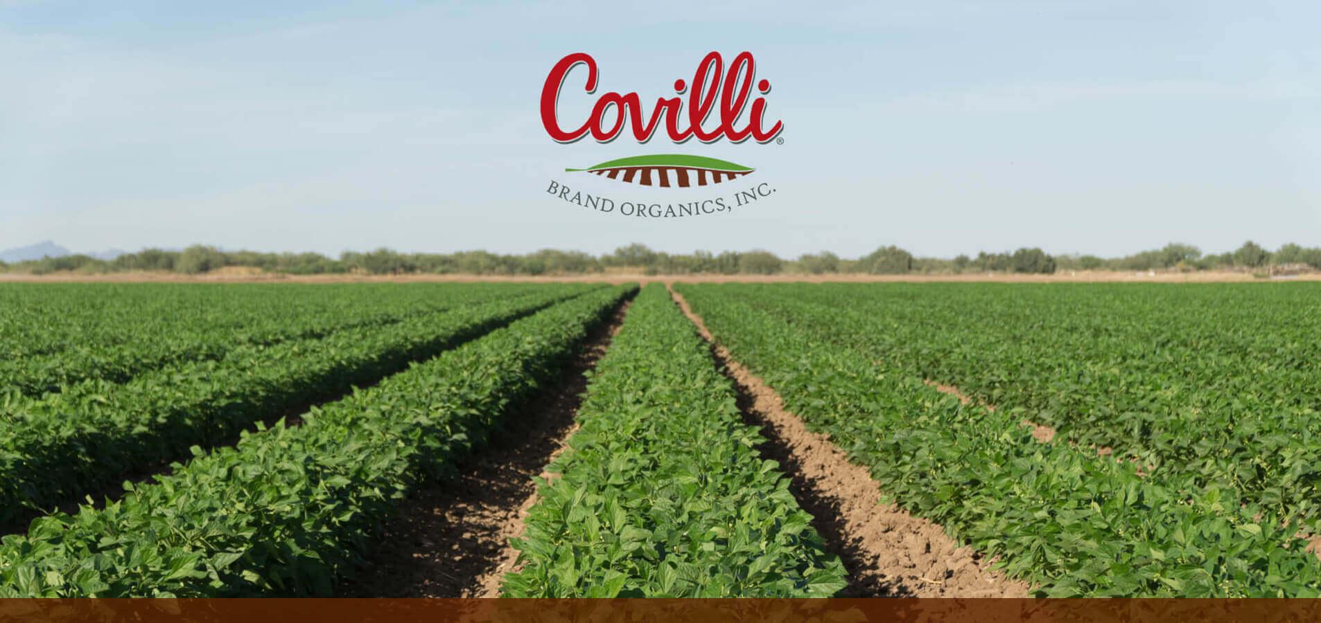 Covilli Banner Image