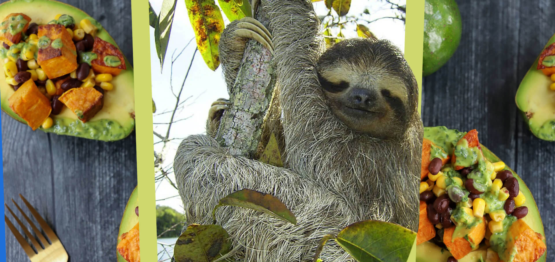 Eat Like a Sloth: Stuffed Tropical Avocados