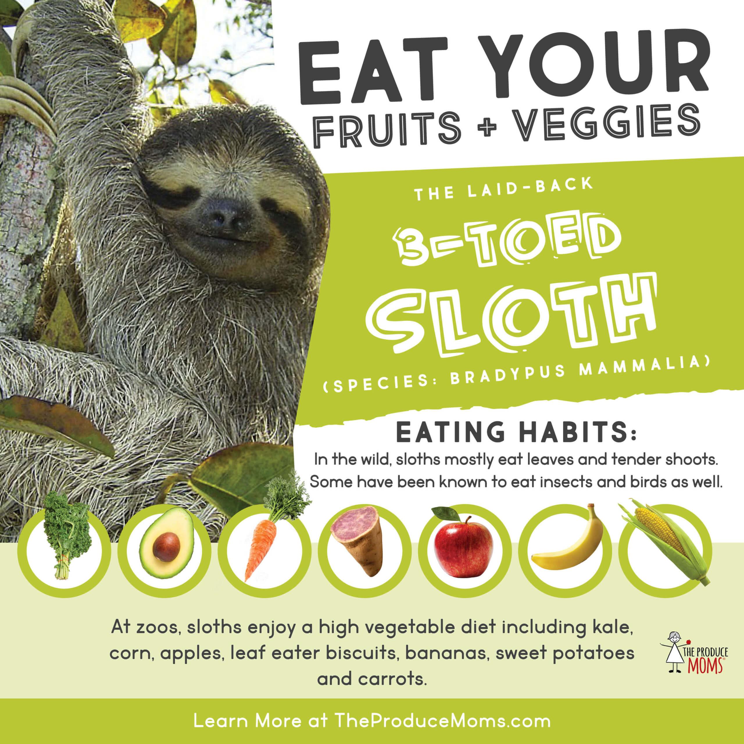 Eat like a sloth