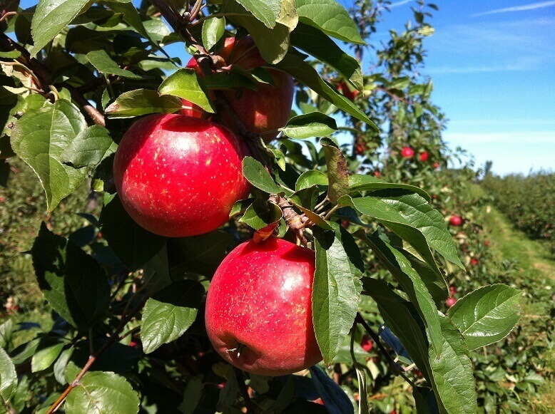 The Applewood Fresh Orchard