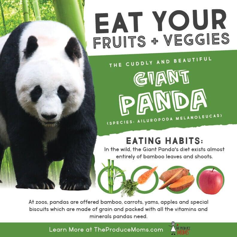 Eat Like a Giant Panda
