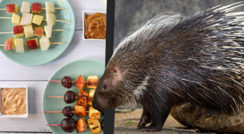 Eat Like a Cape Porcupine