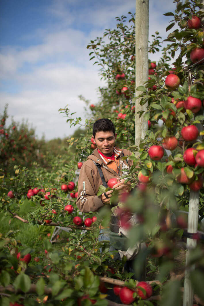 Picking the best apples